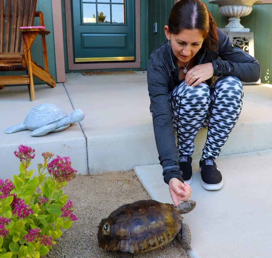 A women with dark hair and wearing a gray sweatshirt squats on a patio and pets a tortoise.