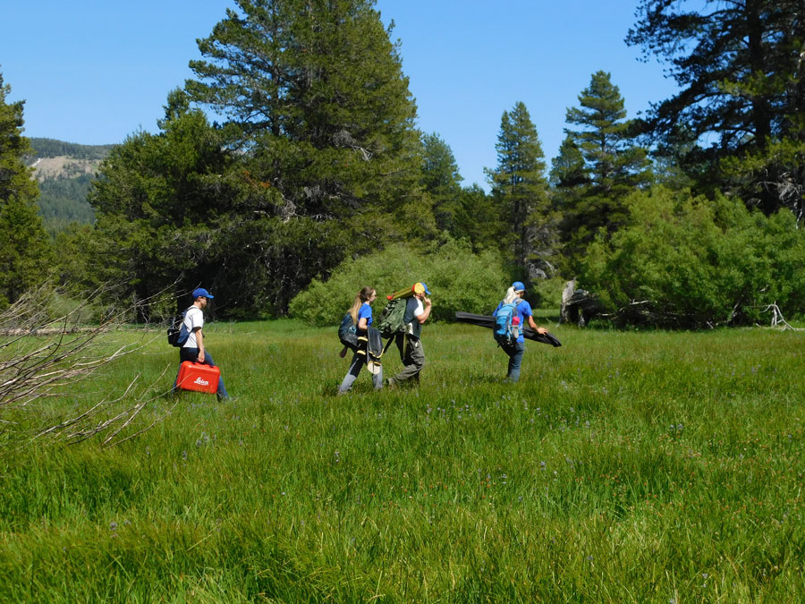 Four people walking across a green meadow, with tall trees in the background.