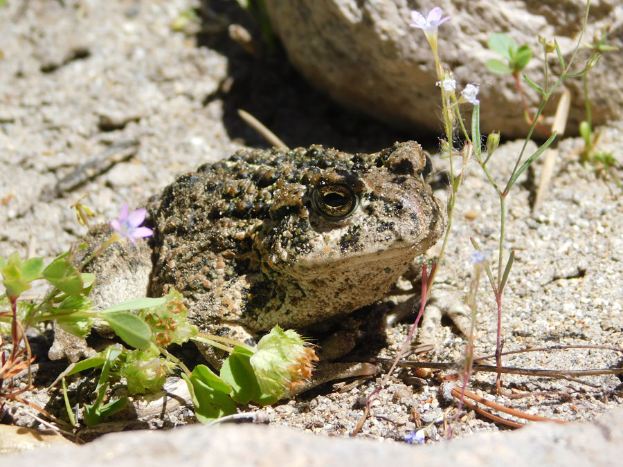 A frog crouches by a wildflower in a rocky landscape.