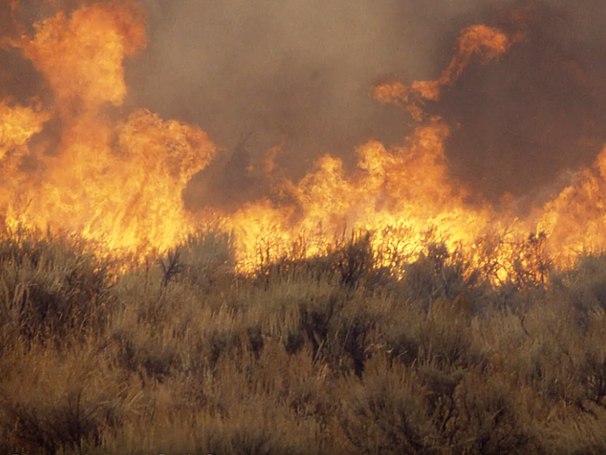 A grass fire burns with invasive cheatgrass in the foreground