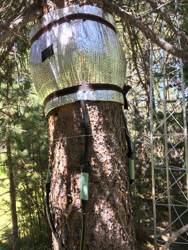 A reflective material is wrapped around a pine tree, with sensors below it.