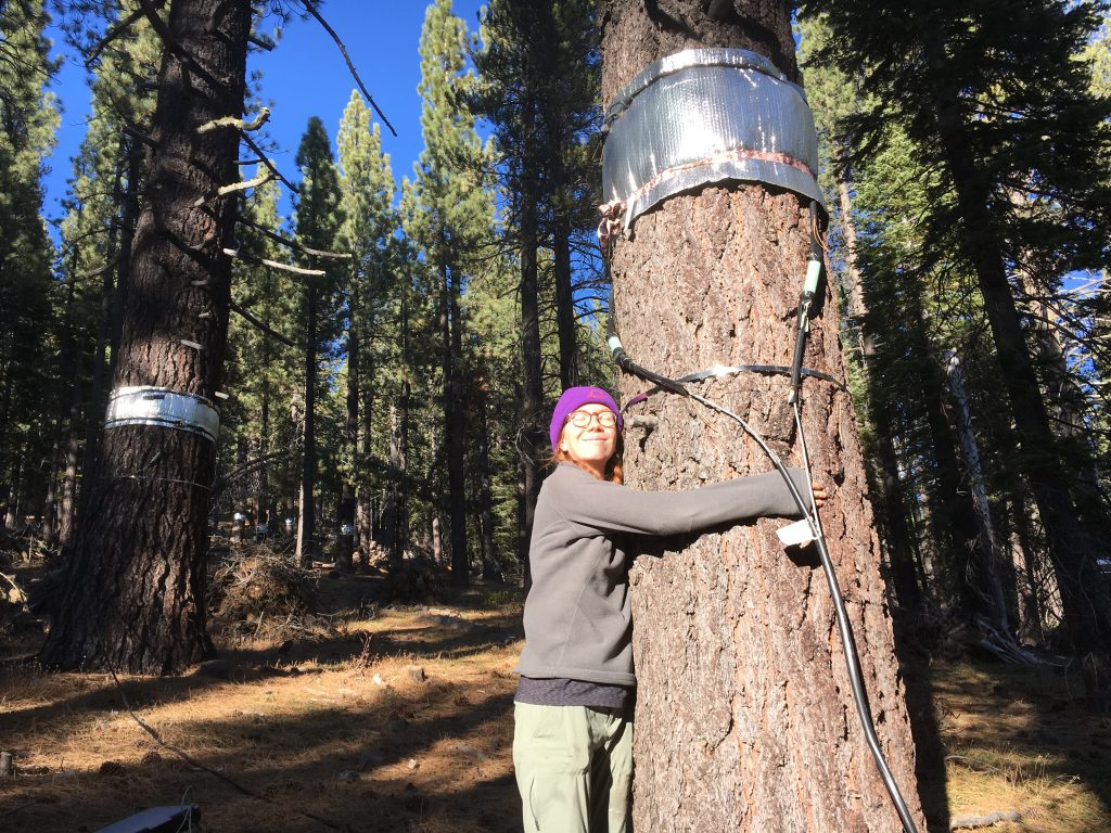 Ava Cooper hugs a pine tree that is equipped with a sensor.