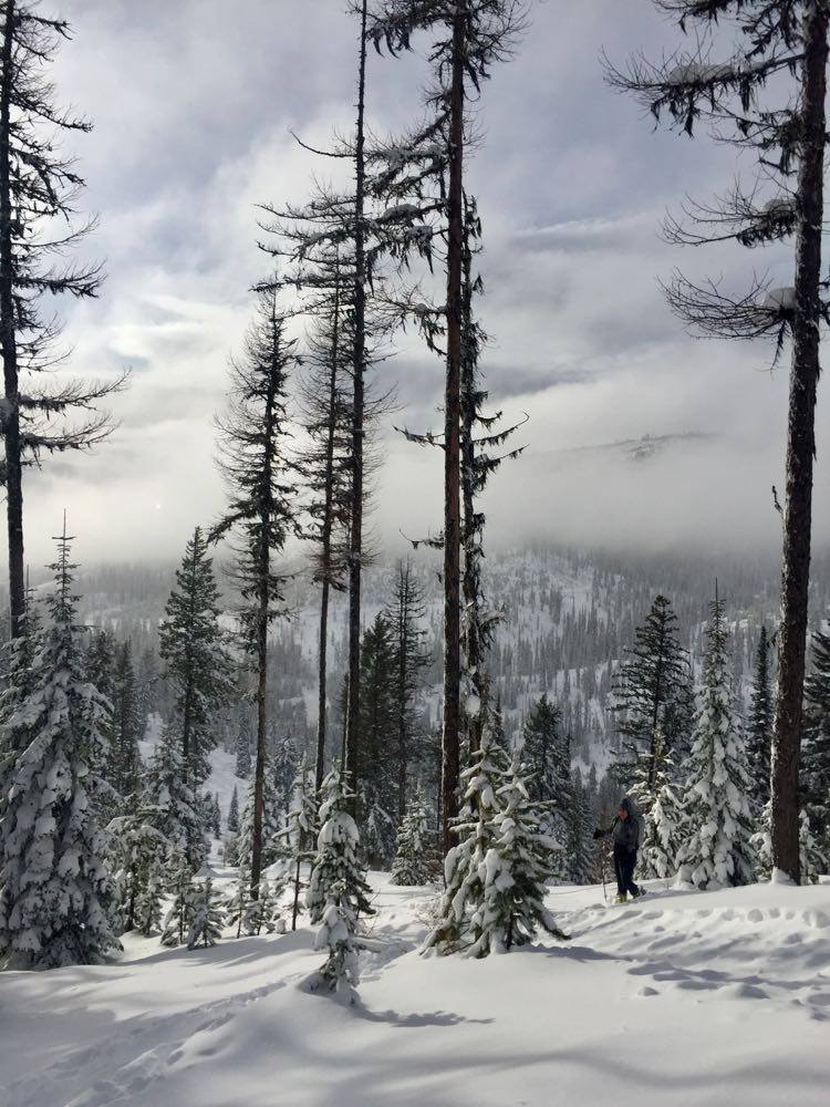 A skier stands amid snow-covered trees in the backcountry of Montana