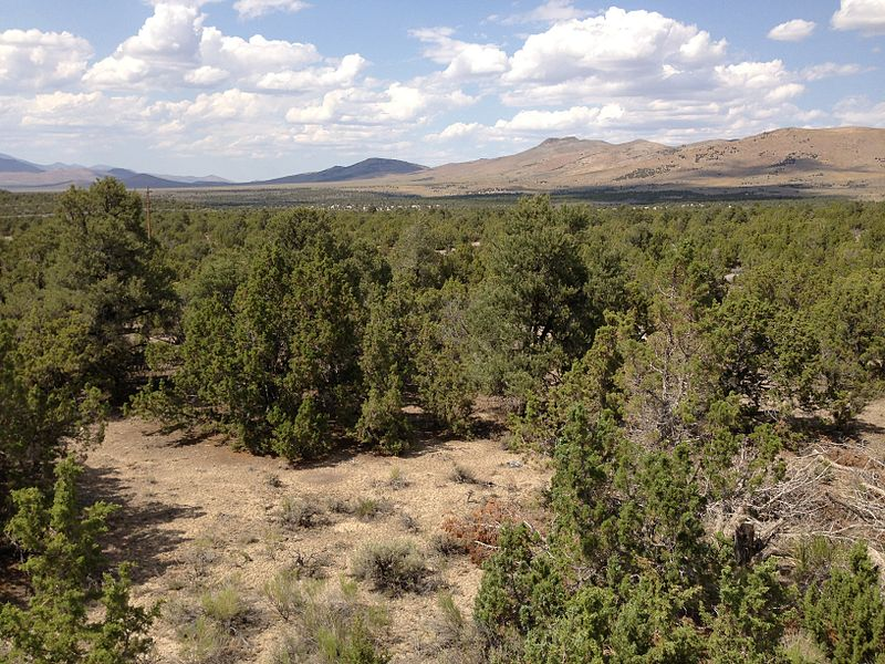 Single-leaf Pinyon and Utah Juniper woodland along Interstate 80 in the Wood Hills of Elko County, Nevada. Wikimedia Commons