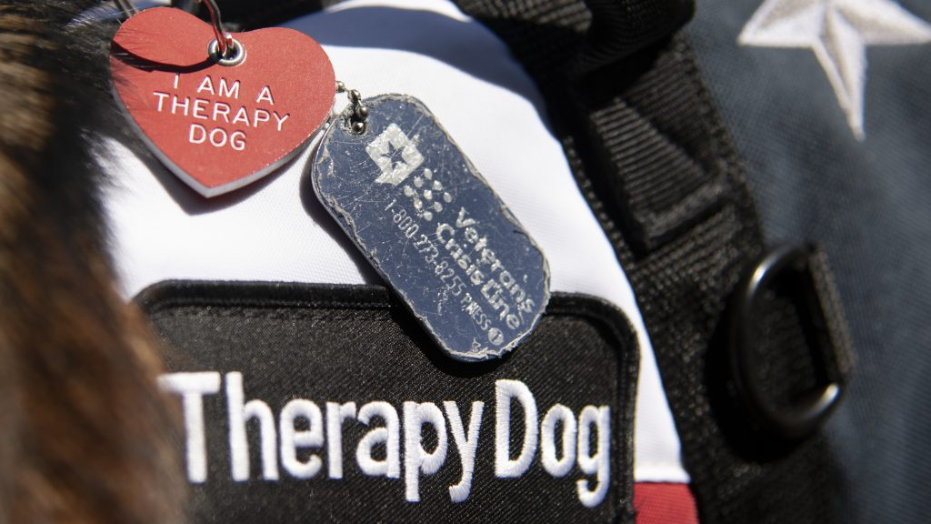 "Therapy Dog tags say ""I am a therapy dog"""