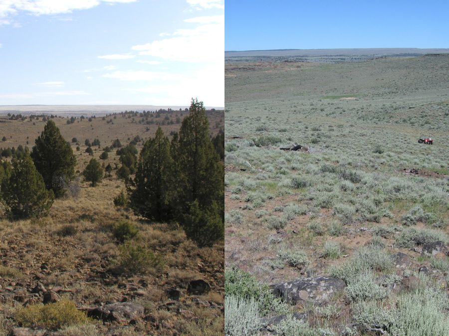 This 2008 vs. 2015 comparison is a removal site in the Warner Mountains in South Central Oregon. Todd Forbes, BLM