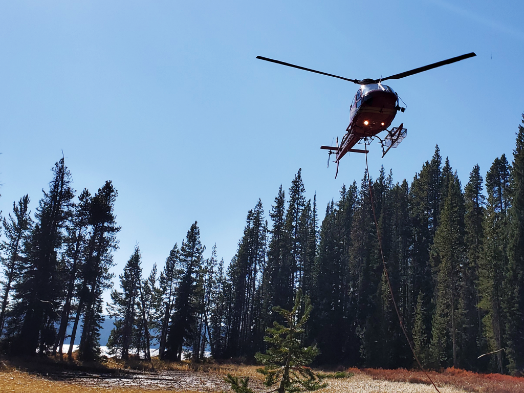 A helicopter hovers above some pine trees next to a lake