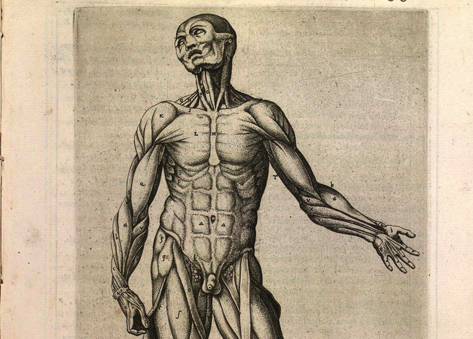 16th century print of male figure, showing superficial dissection of the upper body.