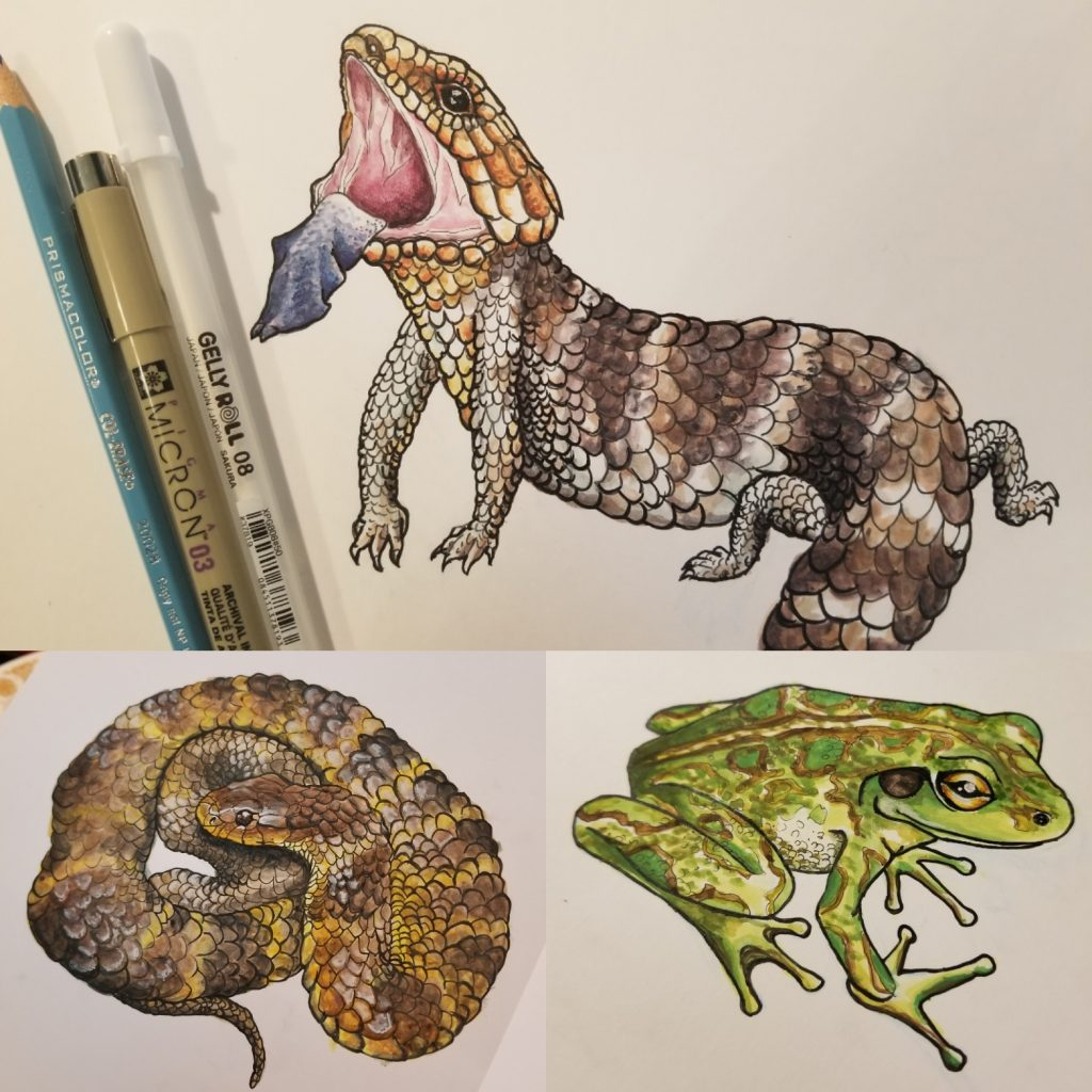 Two pens and a pencil are in the top left corner of the photo. The top right of the photo has a scaly brown lizard sticking its tongue out. A brown and yellow striped scaly snake is coiled in the bottom left of the photo, and a green frog with brown circles on its skin and a yellow eye is in the bottom right of the photo.